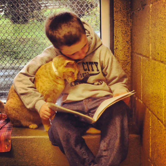 One cat snuggles up for story time (Picture: Berks County ARL)